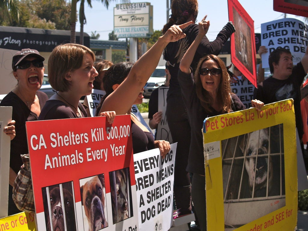 I Heart Puppies Protest in Corona del Mar