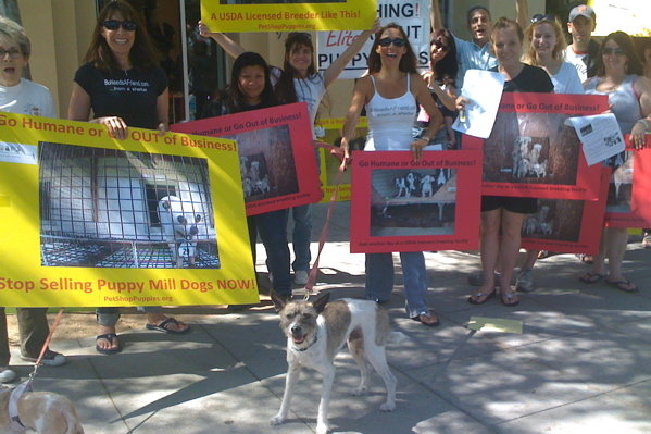 San Diego Moves to Ban Puppy Mill Sales